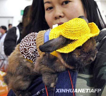 OwnersdisplaytheirrabbitinfancydressanddarkgogglesduringarabbitfashioncontestattheRabbitFestainYokohamacityinKanagawaprefecture,suburbanTokyo.(Xinhua/AFPPhoto)