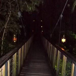 """[图]""""夜晚的精灵""""——新加坡夜间动物园"""
