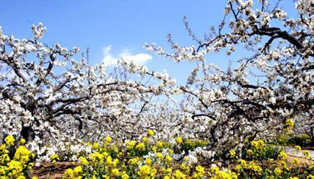 2011年04月18日 - 文雅 - 文雅的乐土