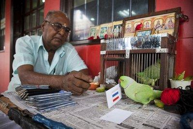 Mani, a 13-year-old parakeet, picks up a card with the flag of the Netherlands in Singapore's Little India neighborhood, Friday July 9, 2010. Mani's owner, fortune-teller M. Muniyappan, claims the bird accurately predicted the winner of the tournament's four quarterfinal games and Spain's victory in its semifinal match.(AP Photo/Joan Leong)