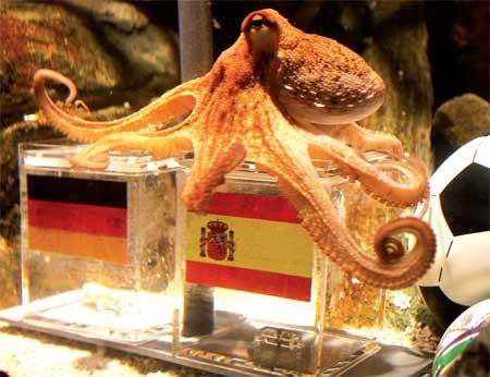 Paul the octopus sits on a box decorated with a Spanish flag and a shell inside it on Tuesday at the Sea Life aquarium in Oberhausen, Germany. Photo: AFP