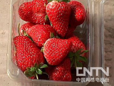 以色列草莓栽培技术 - 农业天地 - 农业天地的博客