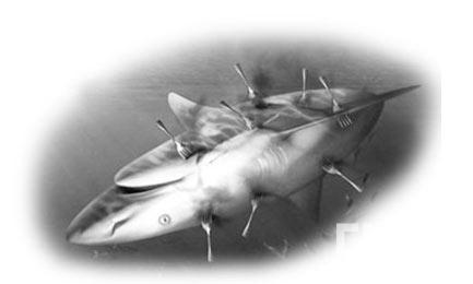 别让鲨鱼再流泪-美食台-中国图片