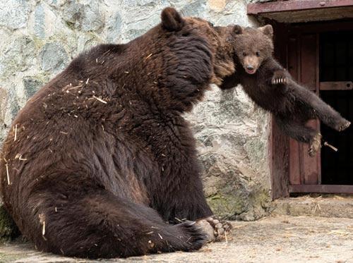 """""""你个熊孩子又惹妈妈生气!""""(设计台词)"""