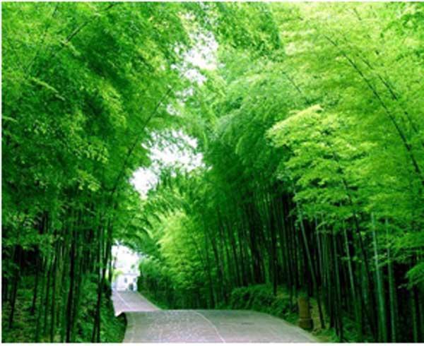 旅游频道 旅游台首页      世外桃源竹海风景区位于江苏省宜兴市区