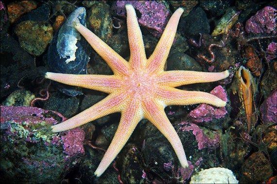 العالم الجميل تحت البحر