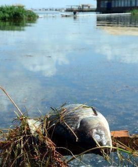 水面上漂浮着塑料瓶等各种各样的垃圾和数不清的死鱼。第一财经日报章轲摄