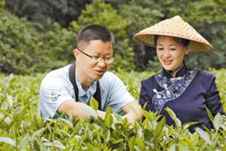 武夷山拍摄采茶