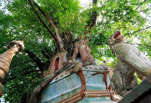 佛塔为实心的砖塔,被树根缠绕覆盖,故名树包塔,是当地傣族建造最早的