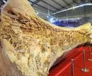 大型木雕《清明上河图》创造吉尼斯世界纪录