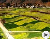 第四届魅力农产品:哈尼梯田红米