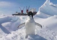 1985年《南极,我们来了》<br><br>