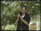 <a href=http://jingji.cntv.cn/20100916/101030.shtml target=_blank>[每日农经]娇嫩的香梨有市场(2010.9.15)</a>