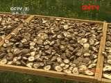 [农广天地]香菇烘烤和贮藏技术(20110929)