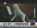 [看东方]多才多艺 小狗猫咪会弹琴
