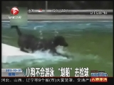 "<a href=http://news.cntv.cn/society/20111031/102071.shtml target=_blank>[超级新闻场]小狗不会游泳 ""划船""去捡球</a>"