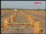 陕西:沙地里种出的高产土豆
