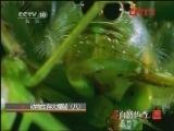 《自然传奇》 20120129 动物生存大揭秘(八)