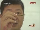 cctv2生财有道视频,刘志新,金花茶种