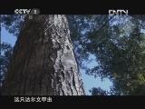 十集电视纪录片《生命》 - 金戈铁马 - 欢迎光临我的博客