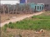 生财有道:邓志勇种植香椿树的财富链