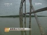 广东省高要黎来基罗非鱼养殖:豪爽借出70