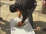 吴百燕番鸭养殖:鸳鸯鸭 树林底下竞自由