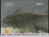 《科技苑》 20120629 陈国明的加法