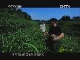 《茶叶之路》 20120815 第三十八集 玉露蒸青