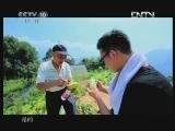 《茶叶之路》 20120818 第四十一集 神农野茶(下)