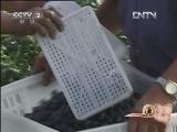 潘利军种植蓝莓:苦尽甘来 蓝莓飘香