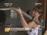宁德富养蛇:探秘蛇王成名的背后