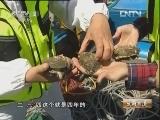许淑芬养殖鲍鱼:鲍鱼里的财富传奇