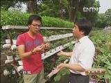 秦明华阳台上种蔬菜:让阳台变成小菜园