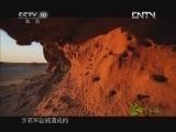 《茶叶之路》 20120921 第七十五集 戈壁牧驼人(下)
