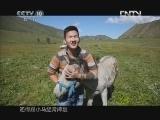 《茶叶之路》 20120924 第七十八集 马奶酒的滋味