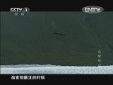[魅力纪录]鸟瞰地球 第4集 南美洲20121004