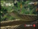《自然传奇》 20121106 动物生存奥秘 (3)