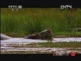 《自然传奇》 20121113 动物生存奥秘(10)