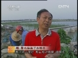 鳖养殖科技苑:鳖也住进了水稻田