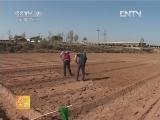 农广天地,固沙经济树种-长柄扁桃种植技术