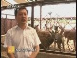 农广天地,茸鹿的阳光棚饲养技术