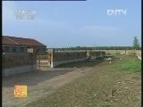 农广天地,新吉细毛羊养殖技术