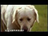 《子宫日记》犬科动物篇