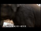 《子宫日记》动物篇(上)
