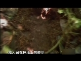《奇闻大揭秘:苏门答腊小矮人》