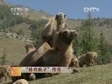 """陈钢粮骆驼科技苑,""""骆驼疯子""""传奇"""
