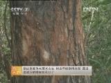 农广天地,林木蛀干害虫防治技术