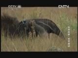 《自然传奇》 20130113 自然故事 变异星球