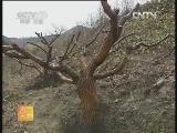 果树种植农广天地,万箭穿心两改法嫁接技术